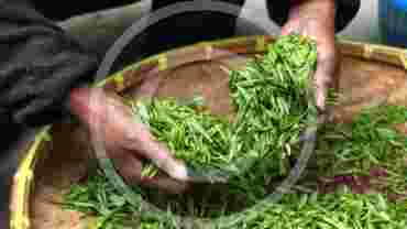 Everyone Should Drink Green Tea